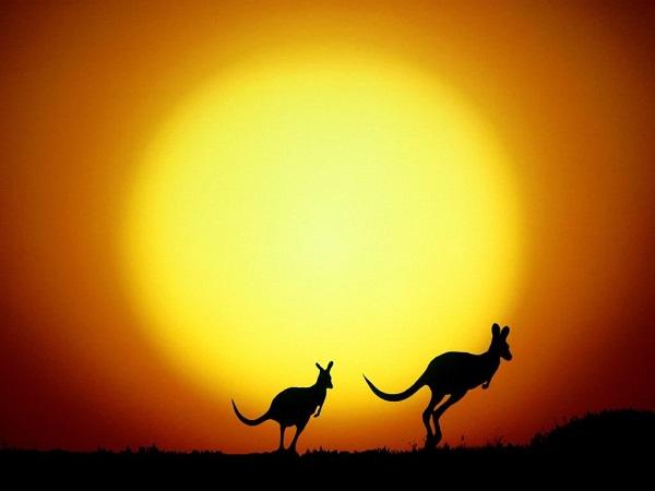The Kangaroo Hop resolution 852x480.