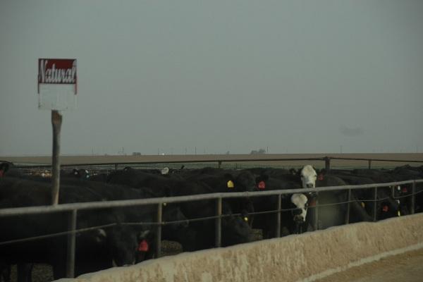 Đến VinaOne thưởng thức thịt bò dinh dưỡng phong cách Mỹ - Aging Black Angus Beef 1