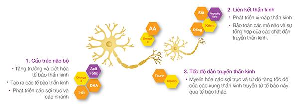 4 lựa chọn hỗ trợ phát triển trí não thai nhi 4
