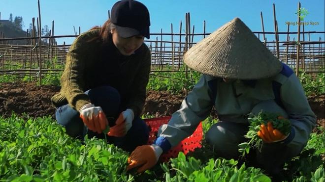 Bài toán phát triển nền nông nghiệp sạch toàn diện trong năm 2017