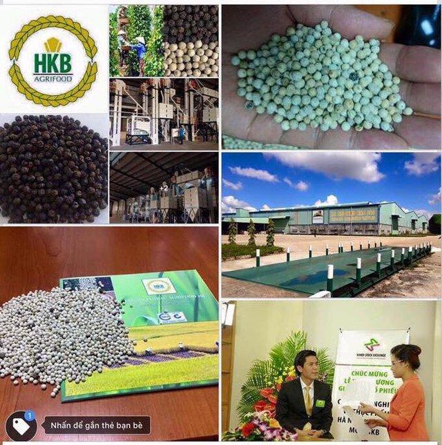 Chuỗi sản xuất và chế biến hồ tiêu xuất khẩu của HKB.