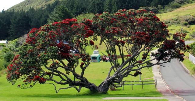Đón giáng sinh và năm mới hấp dẫn như du học sinh New Zealand - Ảnh 1.